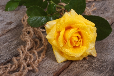 delicate yellow rose on an old rough wooden tabledelicate yellow rose on an old rough wooden table photo