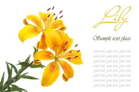 A bouquet of flowers bright yellow lilies isolated on white photo