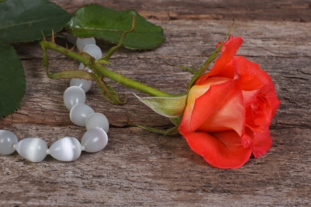 orange rose with dew drops and beads made of natural stone photo