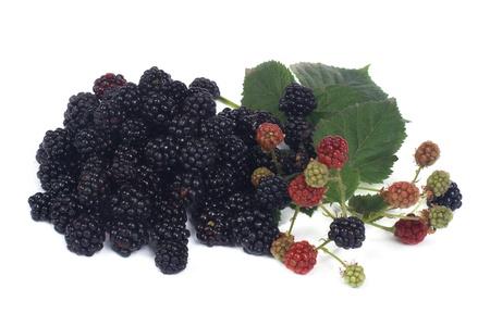 Ripe dewberry isolated on white background photo