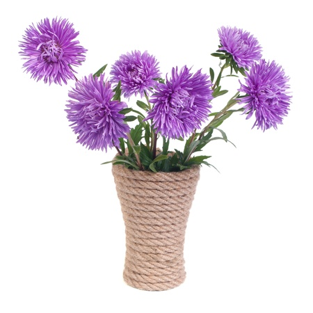 The beautiful blue aster flowers in a vase isolated on white photo