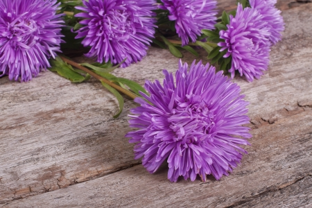 Fluffy blue asters on an old wooden table photo