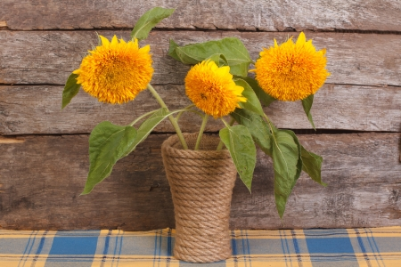 Bouquet of yellow flowers of ornamental sunflowers in a vase photo