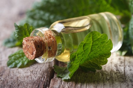 Aromatic oils Lemon balm in a glass bottle with fresh leaves macro horizontal