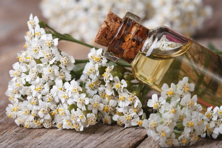 healing plant: Yarrow oil in the bottle close-up on a background of flowers on the table.