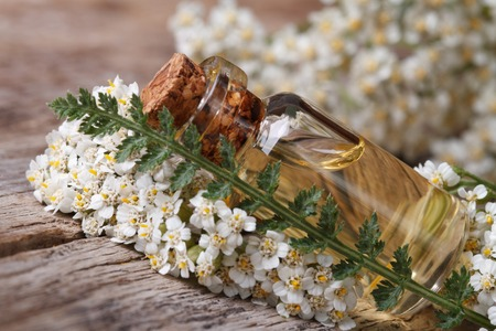 Yarrow oil in a bottle with flowers on the table.  photo