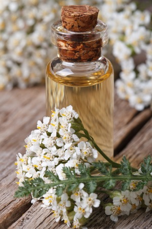 extract of yarrow in a bottle with flowers on the table.  photo