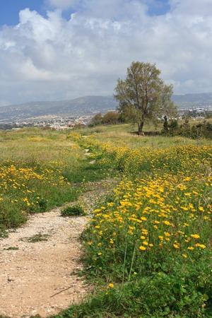 flowering field: Spring in Cyprus. The path on a flowering field. vertical
