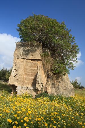 tumbas: Tumbas de los Reyes Paphos, Chipre. Hermoso paisaje de primavera. vertical