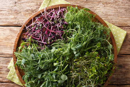 Micro green mix of peas, cilantro, mustard, radish close-up on a plate on the table. horizontal top view from above Reklamní fotografie
