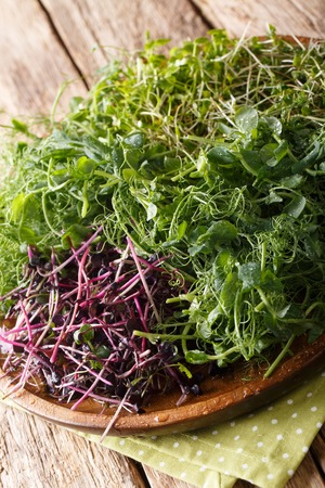 Micro green mix of peas, cilantro, mustard, radish close-up on a plate on the table. vertical Reklamní fotografie
