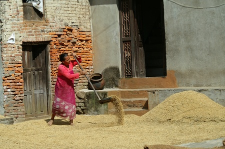 Kathmandu, Nepal - October 7, 2010:woman works the wheat to fields