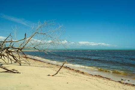 Paradisiacal scene in Corumbau beach - Prado - Bahia - Brazil