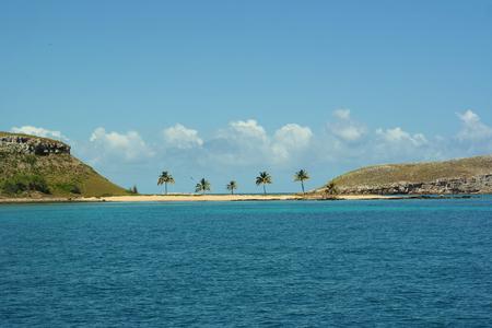 Palm trees in Abrolhos Archipelago