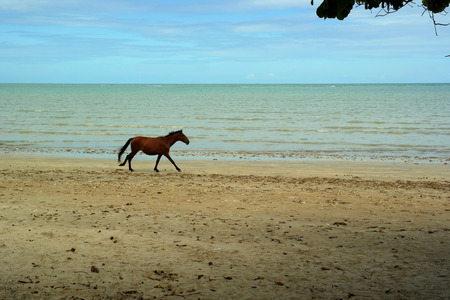 Horse on the beach Banco de Imagens