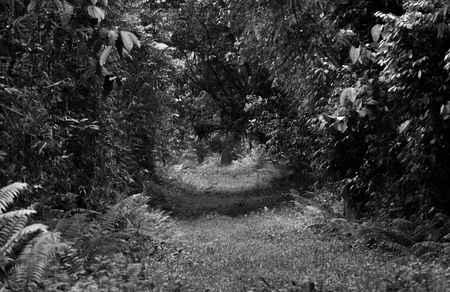 Path on the forest in black and white