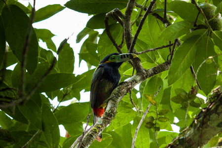Colorful toucan on the tree