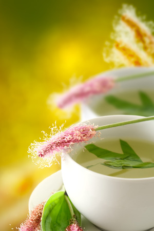 Plantain, medicinal plant, herbal tea with atmospheric background