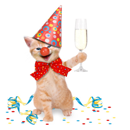birthday celebration: Cat In Party Theme on white background Stock Photo