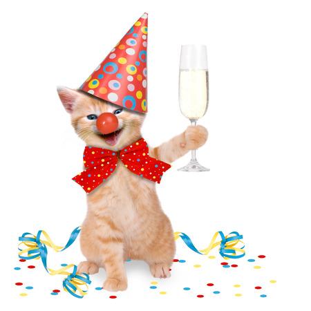 Cat In Party Theme on white background Archivio Fotografico