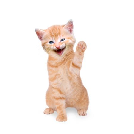 kitten lacht en zwaaien op een witte achtergrond
