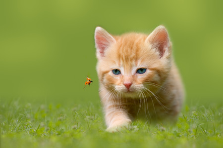 Young cat with ladybug on a green field in the sunshine Archivio Fotografico