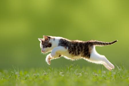 Gato joven salta sobre un prado en la luz de fondo