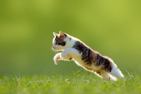 Jonge kat springt over een weide in het tegenlicht