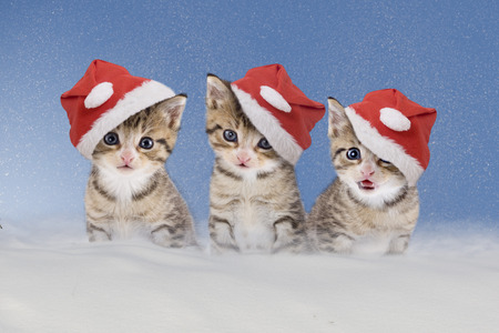 three kittens with Christmas hats sitting in snow photo
