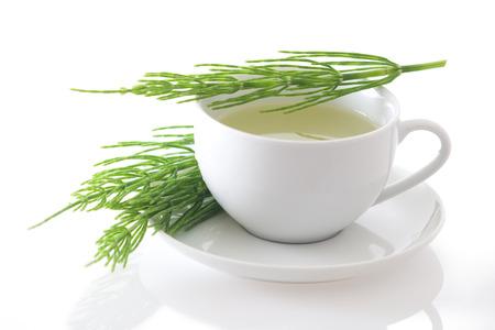 Field horsetail  Equisetum arvense  tea isolated on white background