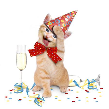 ebrio: Resac�n en Las Vegas, gato despu�s de la fiesta en el fondo blanco