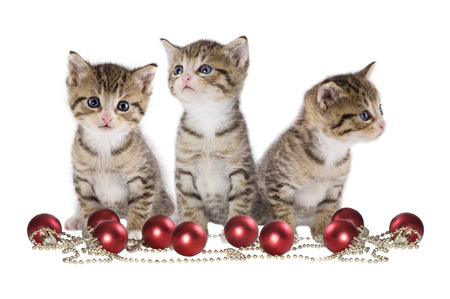 Christmas, three kitten with Santa cap on white background