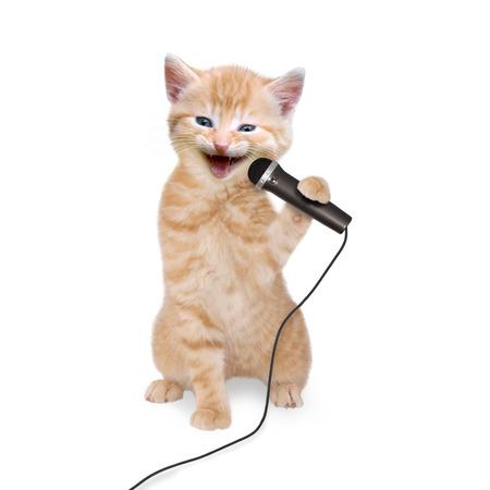 persona cantando: Gatito del gato canta en el micrófono en el fondo blanco Foto de archivo