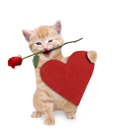valentine s: Cat with a red rose and red heart Stock Photo