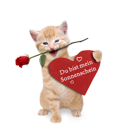 cordially: Cat with a red rose and red heart Stock Photo