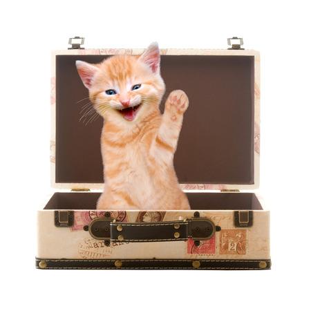 Kat zit te zwaaien en te lachen in koffer geïsoleerd op witte achtergrond