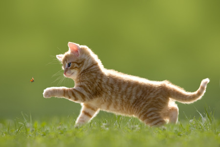 Fiatal macska katicabogár katicabogár a zöld rét háttérvilágítással Stock fotó