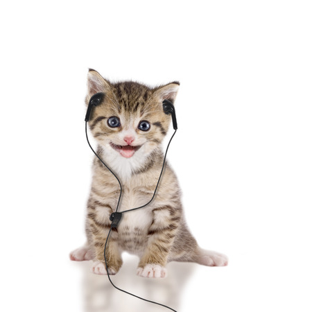 cat, kitten with headphones Imagens