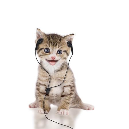 macska, cica, fejhallgatóval