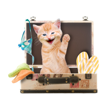 Cat sits waving and laughing in suitcase isolated on white background