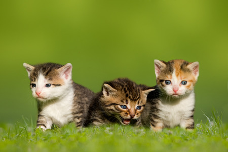 Three small cat kitten sitting on meadow, grass
