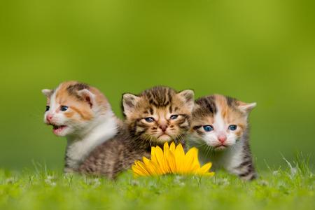 Drie kleine kat kitten zit op de weide, gras Stockfoto