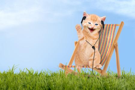 Cat   kitten sitting in deck chair   Sunlounger with headphones