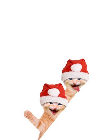 Twee katten, lachen en zwaaien met kerstmuts, geïsoleerd op witte achtergrond