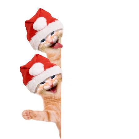 Két macska, és nevetve integet karácsonyi kalap, elszigetelt fehér háttér Stock fotó