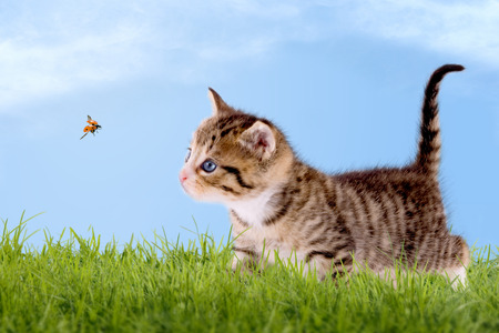 Young cat with ladybug on a green field with blue sky Foto de archivo