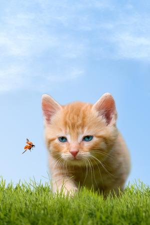 Jonge kat met lieveheersbeestje op een groen veld met blauwe hemel