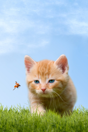 Young cat with ladybug on a green field with blue sky Imagens