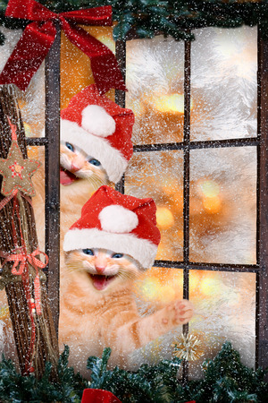 two cats with Santa caps laughing look out a window photo