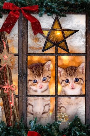 Twee katjes katten die uit een venster met kerstversieringen Stockfoto